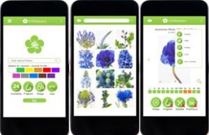 Infoflowers-verkleind